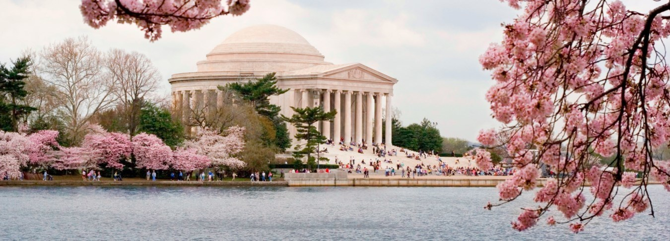 DC Cherry Blossoms. Jefferson Memorial